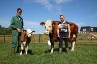 Koe en haar kalfje