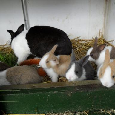 konijnenopvang en cavia opvang