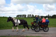 Paard en wagen rond rijden