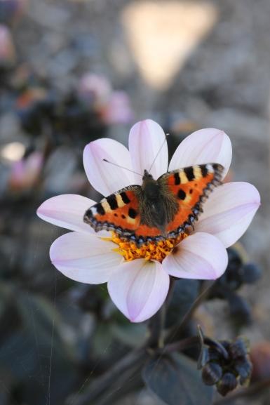 Vlinder in de bloementuin